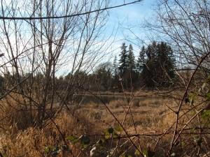 Next door Johnson Creek Wetland