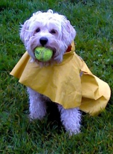 Curly in Raincoat Nov 2011