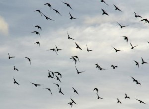 Flying Birds Picture - Post Pic